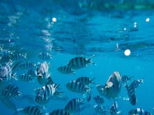 blue-water-fiji-1024x768