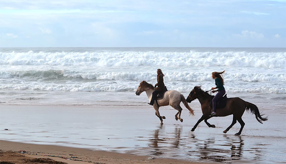 Surfcamp in Algarve Beach Horse Riding