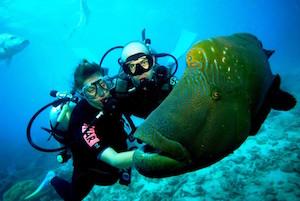 scuba-diving-fiji-43-1024x687