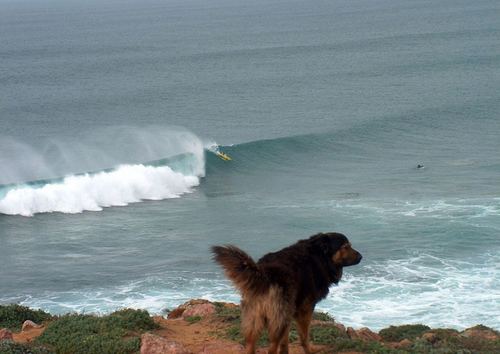 Surfcamp in Algarve dog checking surf conditions