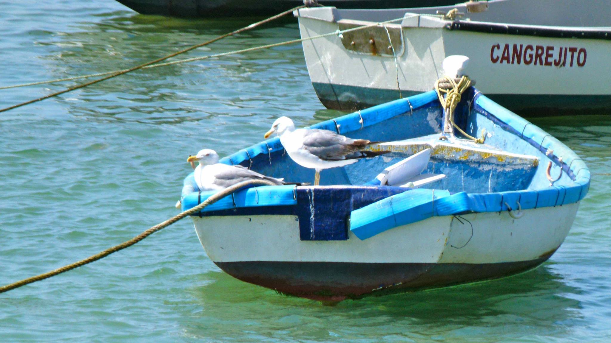boat-conil