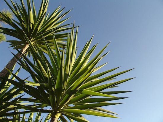 palm-tree-algarve-kitesurf-camp-1