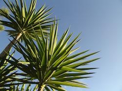 palm-tree-algarve-kitesurf-camp
