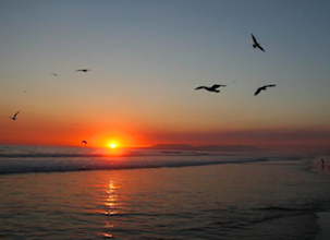 Surf-School-Teens-Camp-Lisbon-birds-sunset
