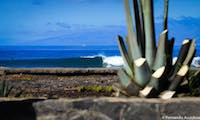 surfer-tenerife-surf-camp