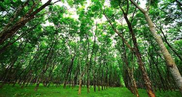 woods-medewi