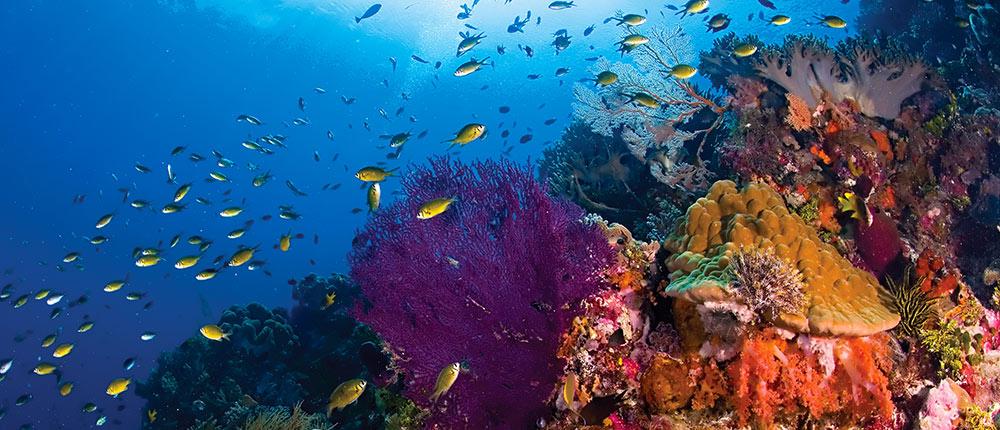 Wakatobi Dive Resort diving