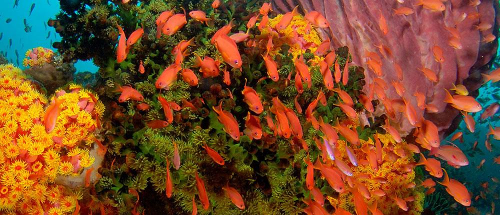 Wakatobi Dive Resort sea