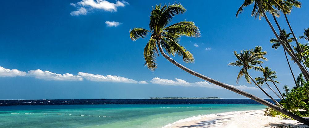 Wakatobi Dive Resort beach