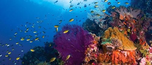 wakatobi dive charter diving