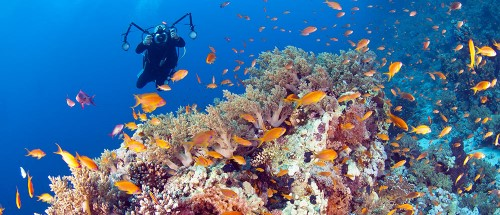 Wakatobi Dive Resort diving